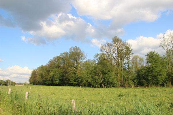 Le petit bois jouxtant le terrain est en zone NATURA 2000