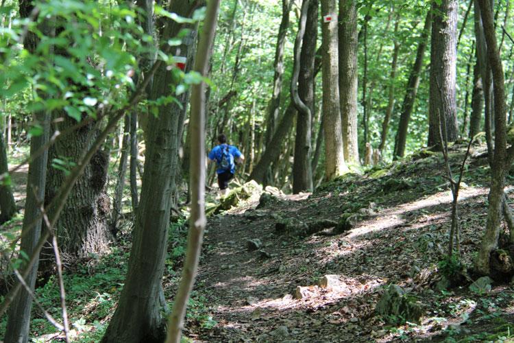 La Roche aux Faucons - Chemin de randonnée de la Crête - Photo: M.Defour ©