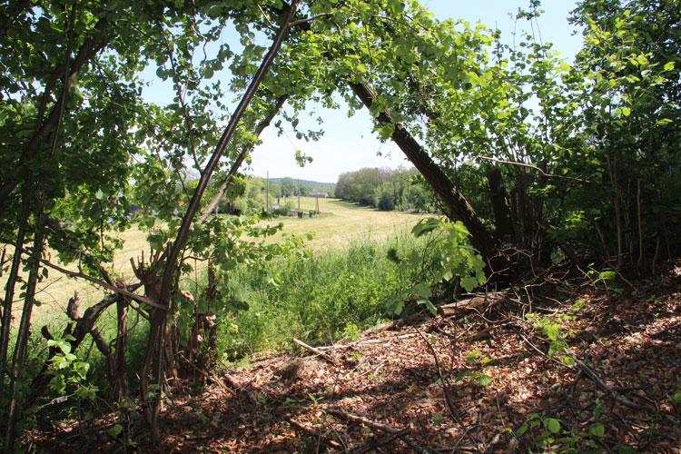 La Roche aux Faucons - Vu du bois, le terrain menacé par un projet de lotissement- Photo: M.Defour ©