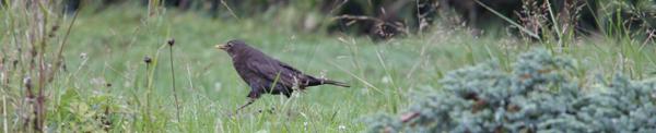 header oiseau