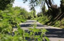La Roche aux Faucons - Traversée de la route vers Avister en bordure du terrain menacé - Photo: M.Defour ©